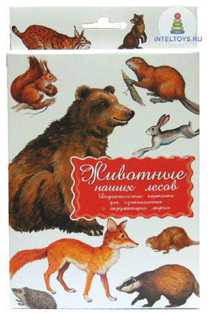 Дидактические карточки «Животные наших лесов»