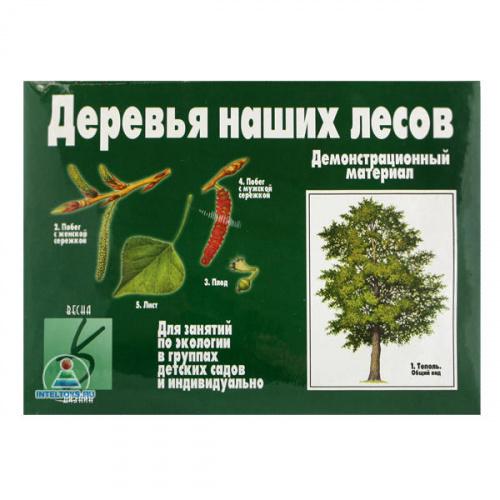 «Деревья наших лесов», демонстрационный материал